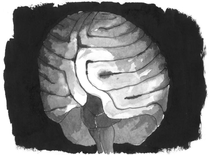 cérebro.png